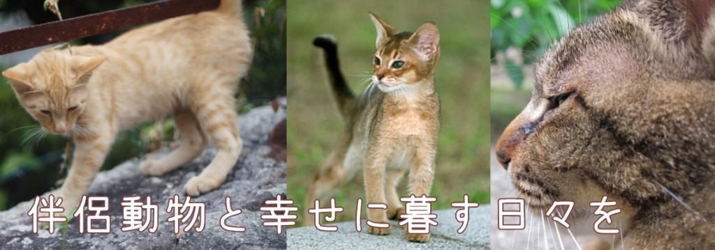 1140-400-cat-02